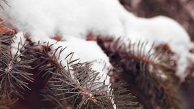Snow-covered fir tree stock video footage