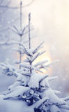 Snow-covered fir-tree Royalty Free Stock Photography