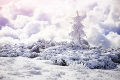 Snow-covered fir tree in the winter mountains. Royalty Free Stock Image