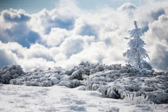 Snow-covered fir tree in the winter mountains. Stock Photos