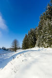 Snow covered fir trees with a blue sky. Snow covered fir trees on a white snowy landscape and blue sky royalty free stock photography