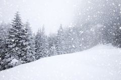 Free Snow Covered Fir Trees In Heavy Snowfall - Christmas Background Royalty Free Stock Photos - 104853098