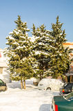 Snow-covered fir trees in Pomorie, Bulgaria Stock Photo