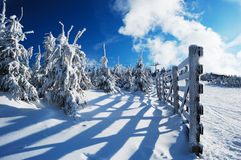 Snow-covered fir trees and rimy wooden fence Royalty Free Stock Photos