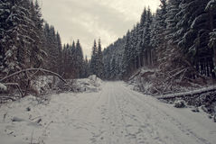 Snow covered fir trees in winter in the evening Stock Photography