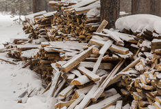 Snow-covered fire wood in pine forest. Royalty Free Stock Photo