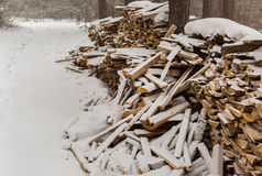 Snow-covered fire wood in pine forest. Stock Images