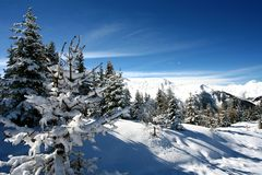 Snow covered firs. Firs forest in the snow Royalty Free Stock Photo