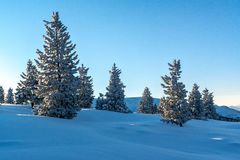 Snow-covered firs in the mountains of Khamar-Daban Stock Images