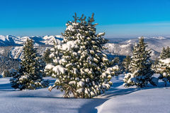 Snow-covered firs in the mountains of Khamar-Daban Royalty Free Stock Image