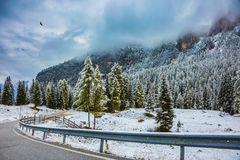 The snow-covered firs and pines Stock Images