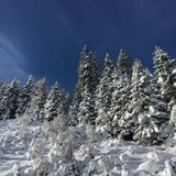 Snow covered firs. In front of a blue sky royalty free stock photo