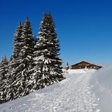 Snow covered firs and timber chalet Royalty Free Stock Images