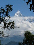 Snow-covered Fishtail mountain, Annapurna range, Nepal, framed by branches. Royalty Free Stock Photos