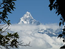 Snow-covered Fishtail mountain, Annapurna range, Nepal, framed by branches. Portrait format view of snowy Fishtail mountain in the Annapurna range of the stock image