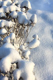 Snow-covered flower beds Stock Photo