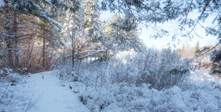 Snow covered footbridge in a winter woods.  Fresh fallen snow. Royalty Free Stock Image