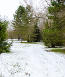 Snow covered footpath and pine trees at winter Royalty Free Stock Photos