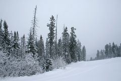 Snow covered forest Stock Image