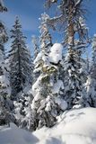 Snow covered forest Royalty Free Stock Photos