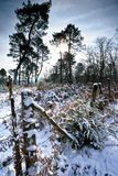 A snow covered forest Royalty Free Stock Images