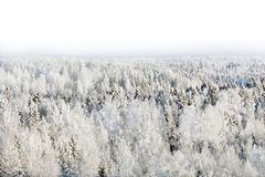 Snow-covered forest Royalty Free Stock Photography