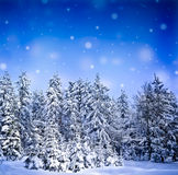 Snow covered forest Royalty Free Stock Image