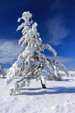 Snow-covered forest Stock Photo