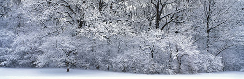 Snow-covered forest. Hd stock photography