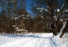 Snow covered forest royalty free stock photo