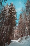 Snow covered forest in the alps  mountains. Snow covered forest mountains alp alps royalty free stock photo