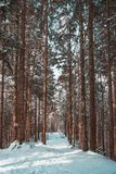 Snow covered forest in the alps  mountains. Snow covered forest mountains alp alps royalty free stock photography
