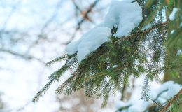 Snow covered forest in the alps  mountains. Snow covered forest mountains alp alps stock images