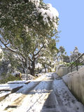 Snow covered forest in Barcelona royalty free stock images