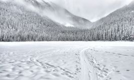 Snow-covered Forest Field stock photo