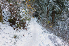 Snow Covered Forest Hiking Trail Stock Photos