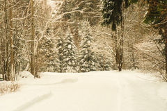 Snow-covered  forest. Horizontal photo, photo took in Russian, photo is usable on picture post card, calendar, gardening Royalty Free Stock Image