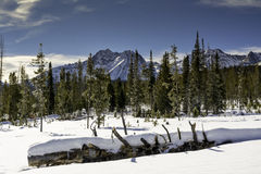 Snow covered forest in Idaho with beautiful mountains Stock Photography