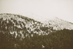 Snow-Covered Forest Landscape Royalty Free Stock Photos
