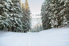 Snow covered forest landscape Stock Image