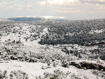 Snow-Covered Forest and Mountain. A snow covered forest with a mountain in the distance Royalty Free Stock Photography