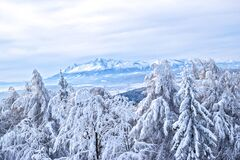 Snow covered forest and mountains