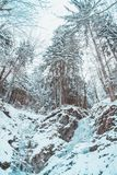 Snow covered forest in the alps  mountains. Snow covered forest mountains alp alps stock photo