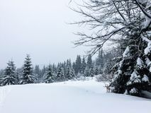 Snow-covered forest in the mountains royalty free stock photos