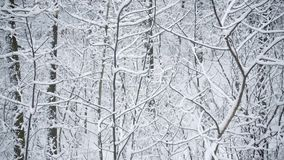 Snow covered forest or park in winter. With tree branches gently swaying in breeze stock footage