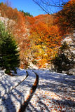 Snow covered forest path Royalty Free Stock Photo