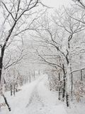 Snow-covered forest path Stock Photography