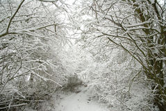 Snow-covered forest path Royalty Free Stock Images