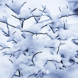 Snow covered. On a forest plant background Stock Photos