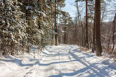 Snow covered forest road. In a cold winter day Stock Photo